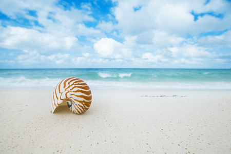 nautilus shell  on golden beach  sand and glitter seascape background Stock Photo