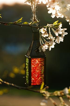 Marokkaanse glazen en metalen lantaarns lampen met bloesem kersenbloesem amandel Stockfoto