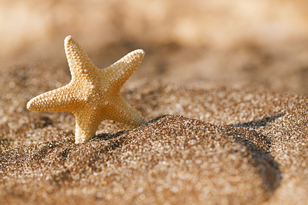 starfish on black sand beach, shallow dof