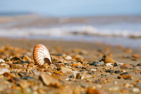 nautilus pompilius sea shell seashell on black sand beach, Isle of Wight