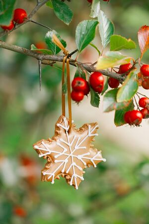 ahorcada: ginger snowflake cookie hanging on a tree with red berries,  shallow dof