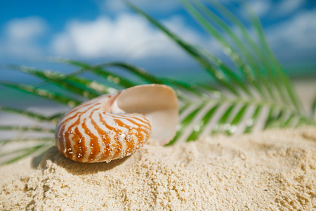 nautilus sea shell on golden sand beach with palm leaf and seascape in the sun, shallow dof