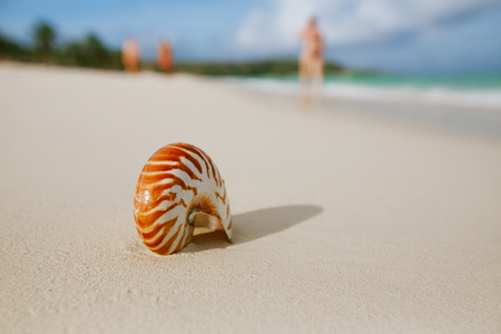 nautilus sea shell on perfect sand beach with waves and seascape in the sun, shallow dof