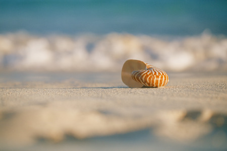 nautilus sea shell on golden sand beach with waves in  soft sunrise ight, shallow dof Stock Photo