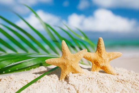 red starfish with ocean, palm leaf, white sand beach, sky and seascape, shallow dof Stock Photo