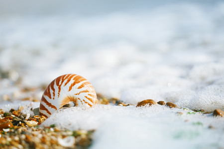 British summer  beach with nautilus pompilius sea shell Banco de Imagens