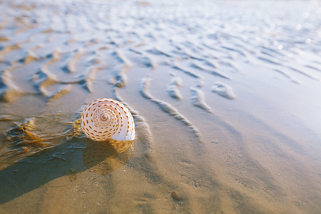 British summer beach with pretty sea shell, sand and seaweed Stock Photo