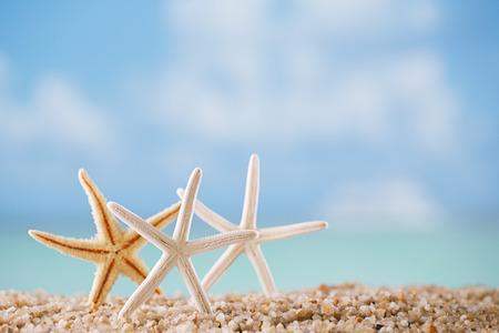 rozgwiazda na białej plaży oceanu z tłem seascape