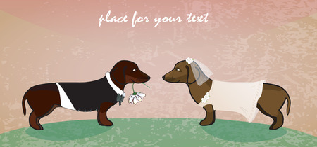 Dachshunds as cute groom and bride.