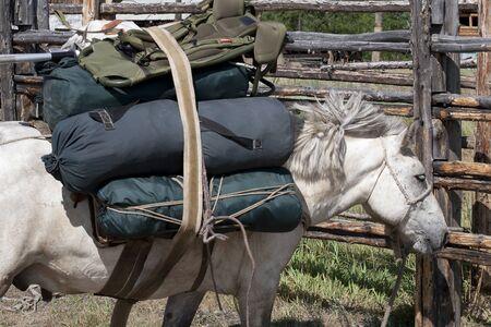 heaviness: Yakut horse.