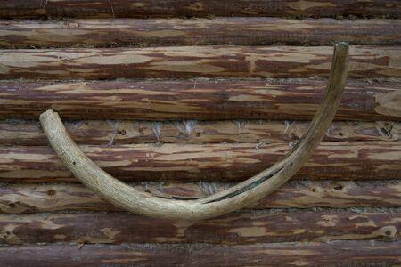 tusk: Mammoth tusk wall.