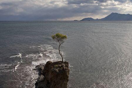 solter�a: Pavo. El mar Mediterr�neo.