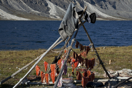 desiccation: Sun dried slices of salmon on the lake. Yakutia. Russia.