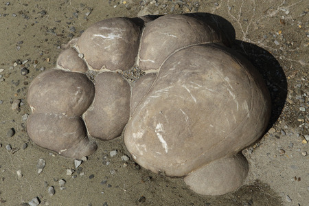 roundish: Sand concretions on the banks of the Lena River. Yakutia. Russia.