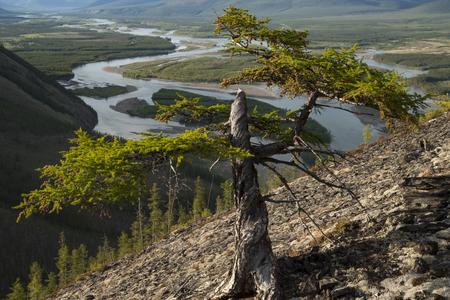 chippy: Broken larch on a hillside above the river. Indigirka River. Yakutia. Russia. Stock Photo