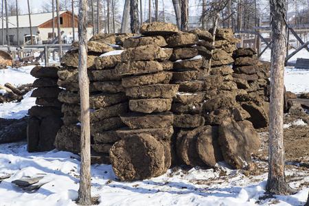 muck: A pile of bricks from manure. Settlement Honu. Yakutia. Russia.