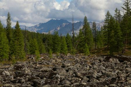 highlands region: Stone collapse in mountain taiga. Omulyovka Highlands. Magadan Region. Russia.