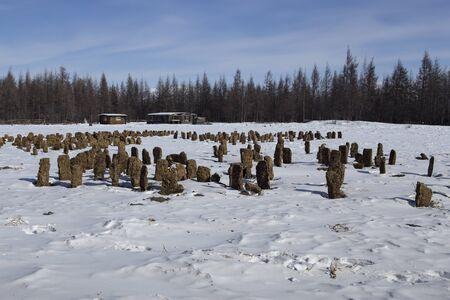 muck: Bricks from manure to dry. Yakut village Honu. Russia.