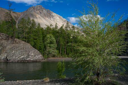 the taiga: Beautiful mountain river and taiga. Omulyovka River. Magadan Region. Russia.