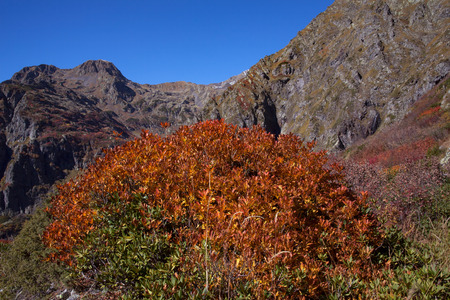 red bush: Red bush on the mountainside.