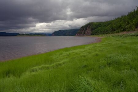 lena: The thick grass on the bank of the river. Lena river. Yakutia. Russia. Stock Photo
