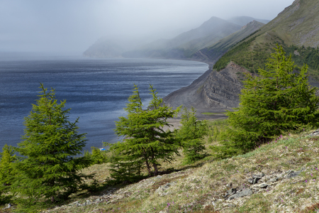 Larch trees on a hillside in a large river. Lena river. Yakutia. Russia. Stock Photo