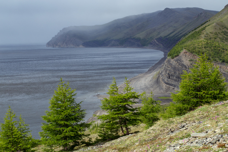lena: Larch trees on the shore of the great river. Lena river. Yakutia. Russia.