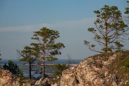 lena: Pines standing on top of a cliff. Lena river. Yakutia. Russia.