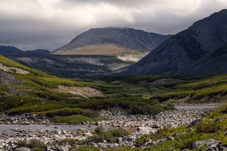 thickets: Mountain valley covered with thickets of cedar. Peninsula Kony. Magadan Region. Russia. Stock Photo