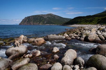the watcher: The creek flows into the sea and a dog on a rock. Koni Peninsula, Magadan region, The Sea of Okhotsk, Russia. Stock Photo
