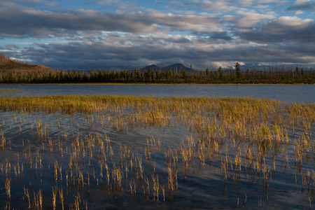 other side: The grass in the lake and mountains on the other side. Lake Labynkyr, Oimyakon region, Yakutia, Russia.