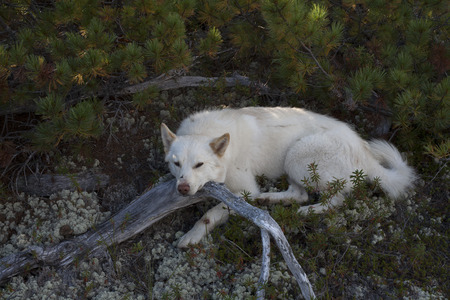 to shade: White dog resting in the shade. Stock Photo
