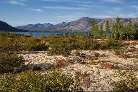 enano: Glade with moss on the lake. Lake Labynkyr. Yakutia. Russia.