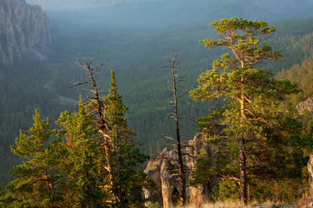 lena: Pine trees illuminated by the sun on the edge of a deep valley. Lena River. Yakutia. Russia. Stock Photo