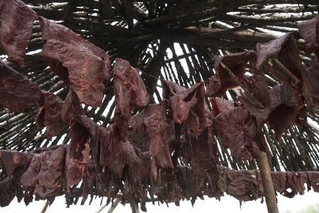 traditionary: Layers of meat hung for drying. Hunting in Yakutia.