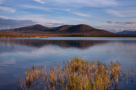 Grass growing in the water on the lake. Lake Labynkyr. Yakutia. Russia.