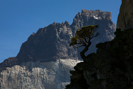 The whimsical silhouette of a tree against the mountain. National Park Torres del Paine. Chile.