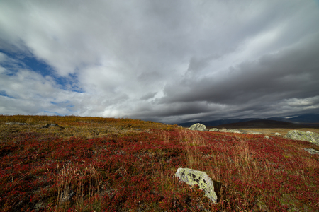Bright autumn colors in mountain tundra. Polar Urals. Russia.
