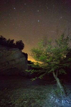 The tree in the gorge under the starry sky. Vashlovani protected areas in Georgia.