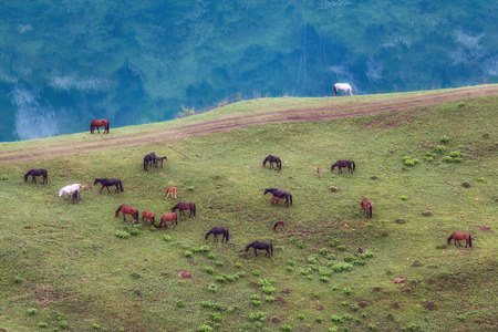 A herd of horses in a meadow near the shore of the lake. Lake shadhurey. North Caucasus.