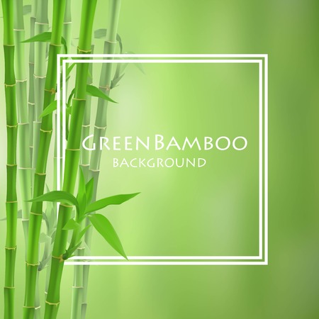 borders plants: Bamboo creative for backgrounds, cards  and other projects.