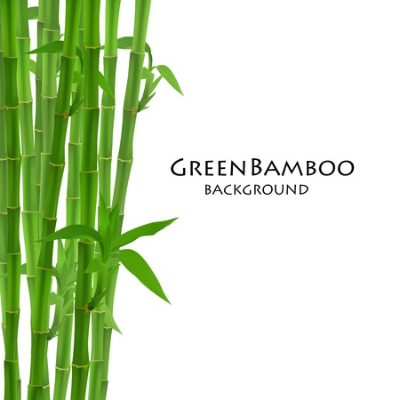 bamboo border: Bamboo creative for backgrounds, cards  and other projects.