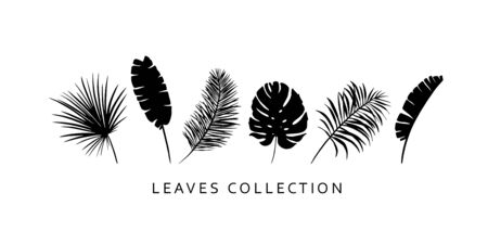 Set of palm leaves. Exotic, tropic leaf silhouettes. Botanical design elements.