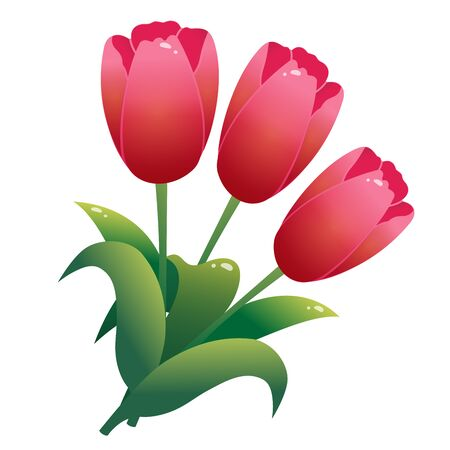 Color image of bunch of red tulips on white background. Flowers. Vector illustration.