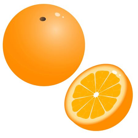 Color image of cartoon oranges on white background. Fruits. Vector illustration.