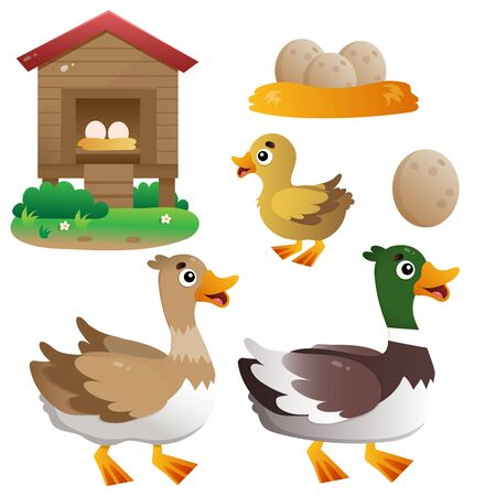 Color image of cartoon duck with drake and duckling on white background. Farm animals. Vector illustration set for kids.