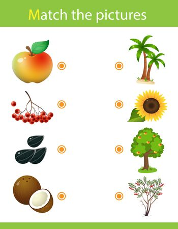 Matching game, education game for children. Puzzle for kids. Match the right object. Plants and their fruits. Sunflower, mountain ash, apple tree,  palm tree. Stok Fotoğraf - 139443080