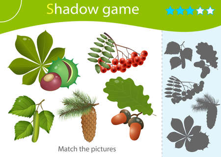 Shadow Game for kids. Match the right shadow. Color images of forest fruits and leaves of trees. Oak, birch, chestnut, Rowan, pine, fir. Plants. Worksheet vector design for children and for preschoolers.