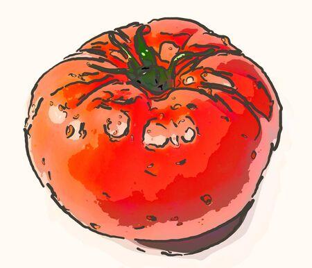 Tomates rouges Banque d'images - 90075913