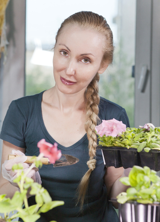 the young beautiful woman with a braid seedling petunia in boxes in the spring